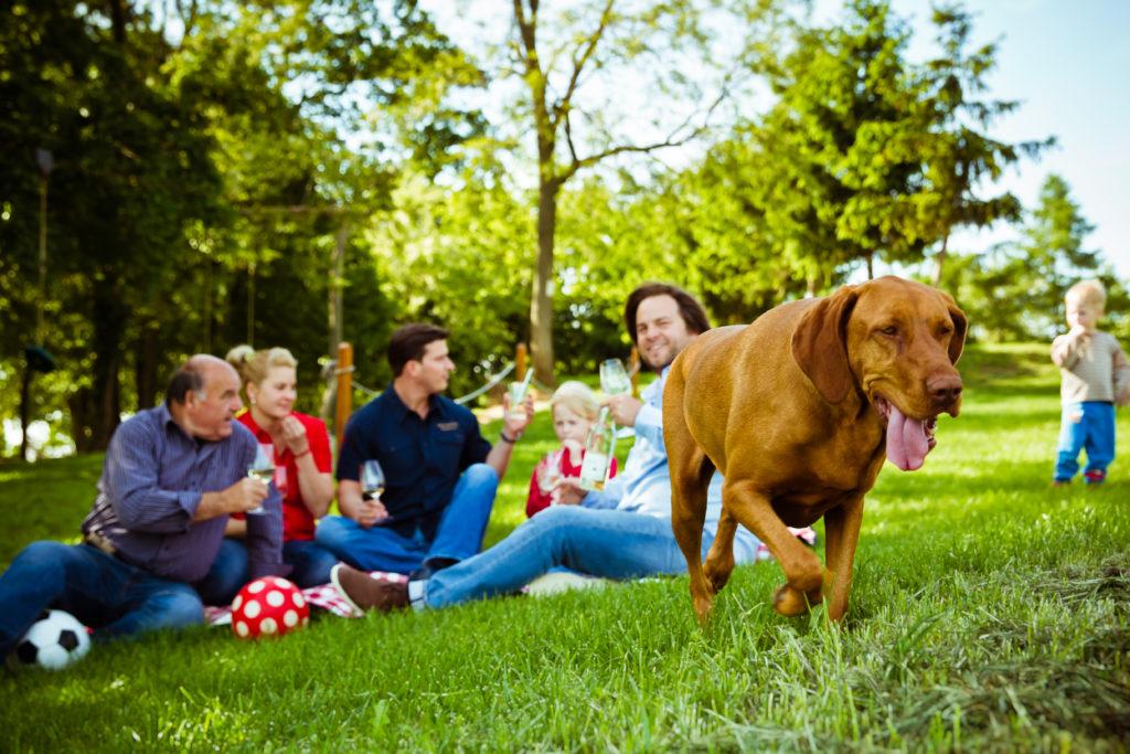 Családi piknik a birtokon
