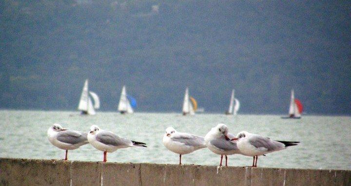 Balatonfüreden a parton október végén.